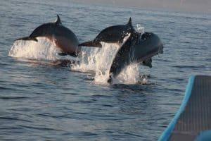 Lovina bali dauphins activités indonésie