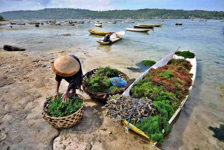 Nusa Lembongan Bali culture algues