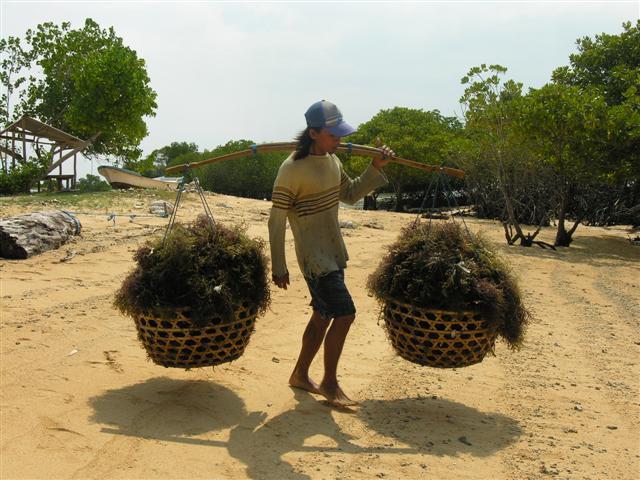 algues nusa lembongan ile indonesie