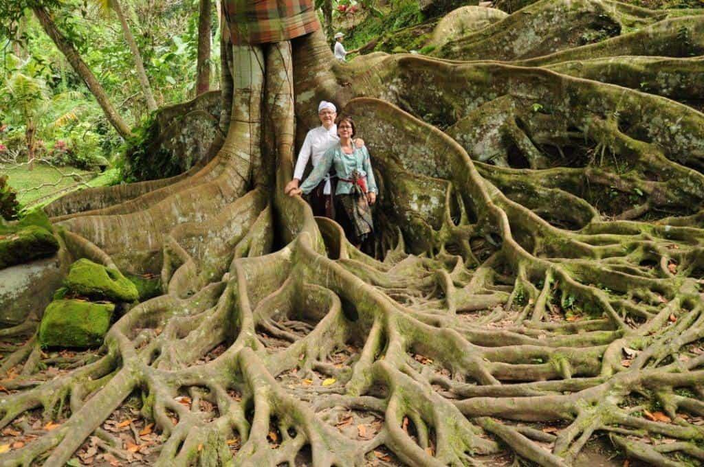 arbre ancestral flore balinaise