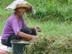 Bali Authentique agriculteurs client grand-mère