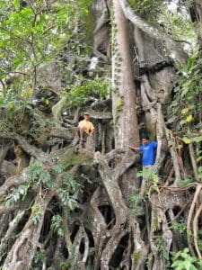 Bali Authentique guide client jean pierre big old trees