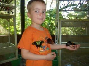 parc aux papillons bali découverte faunes