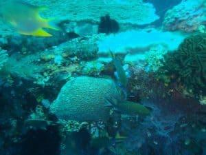 Paysage sous-marin de plage de Bali