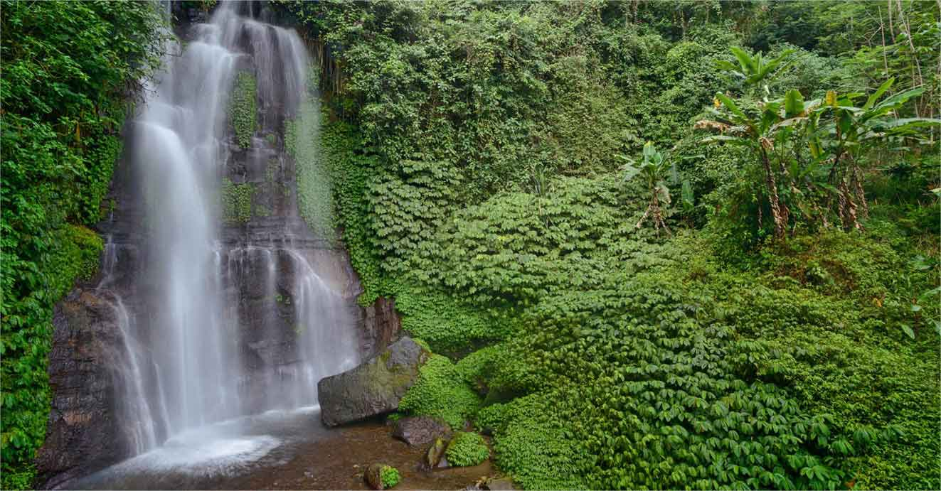 bali cascade nature luxuriante panorama