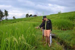 Bali en famille promenade