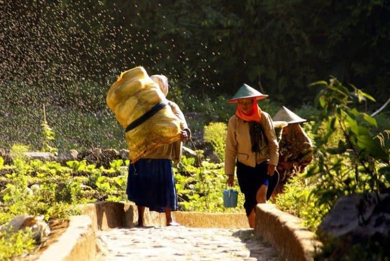 Bali fermiers récolte