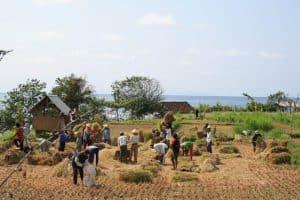 Bali agriculteurs du riz Bali Authentique