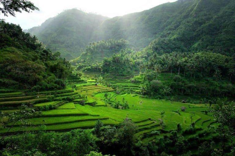Bali rizières en terrasses mystique