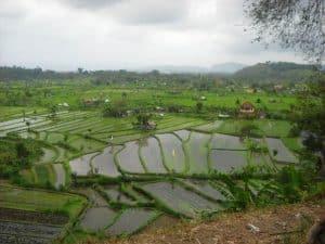Bali rice field jatiluih Bali Authentique