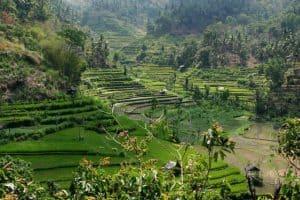 Bali rice field karangasem