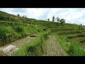 Bali rice field karangasem Bali Authentique