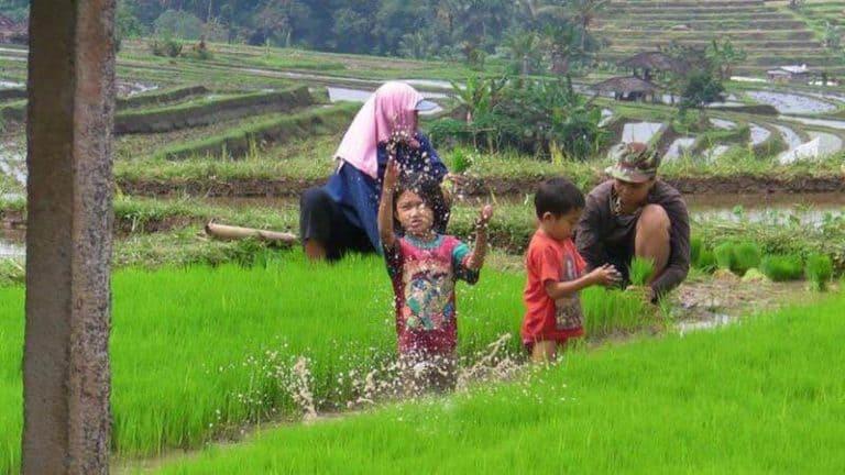 Bali enfants rizière