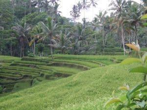 Bali rice field tegallalang Bali Authentique