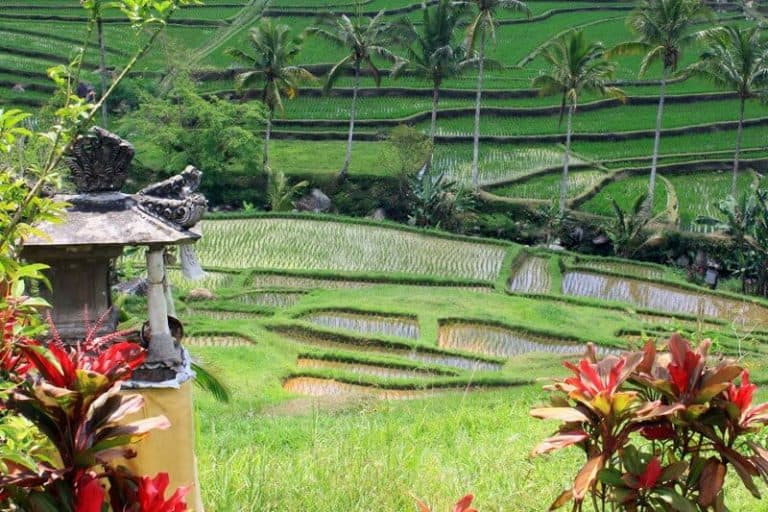 Bali rizières en terrasses lanterne