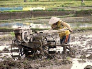 bali rizière fermier agriculture laboure asie