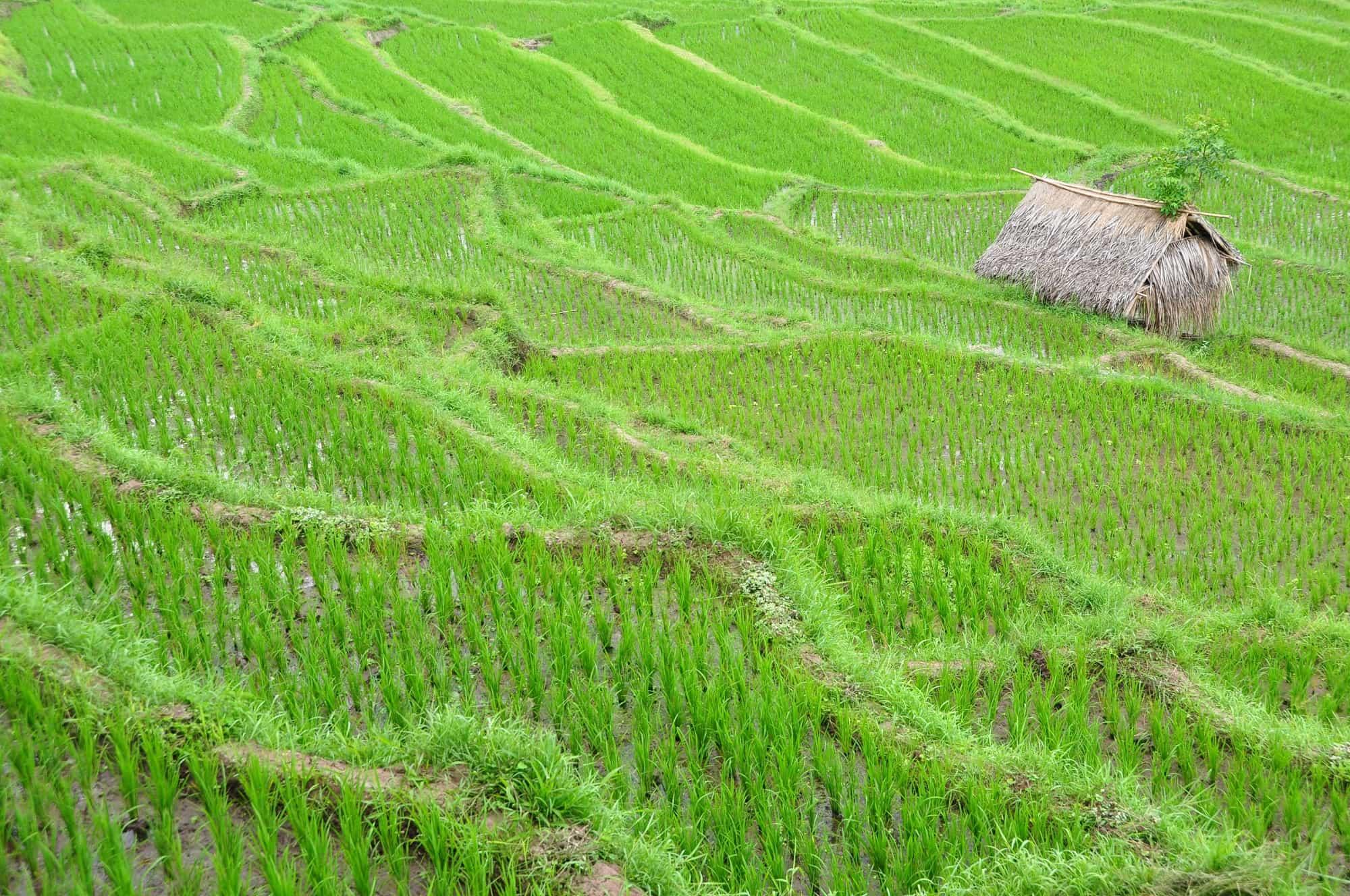 bali rizières en cascade maison