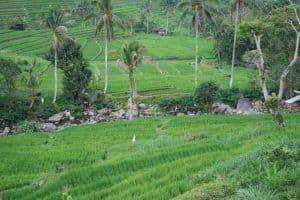 Bali rice fields tegallalang