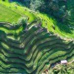 rizières vue du ciel par drone