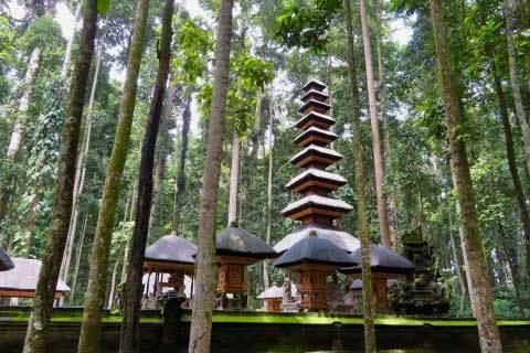 Bali Temple Sangeh Forêt Mur Lumière Mousse Mystique Hindou Indonésie