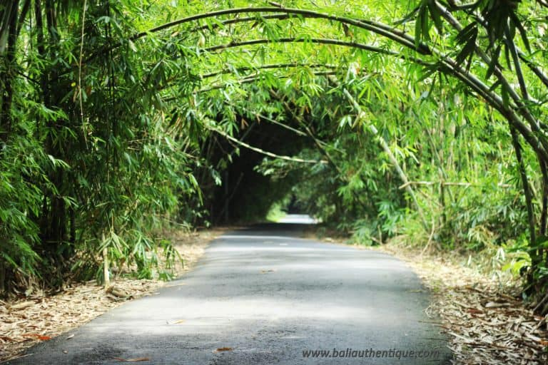 Balinais bambou penglipuran village