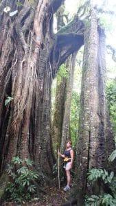 banyan arbre sacre bali