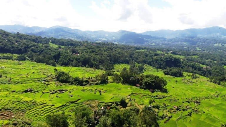 Batutumonga Toraja Sulawesi rizière