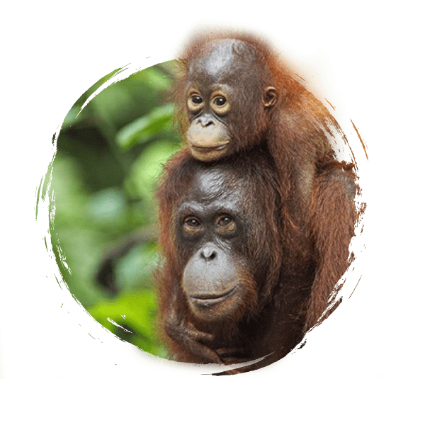 voyage Bornéo Indonésie