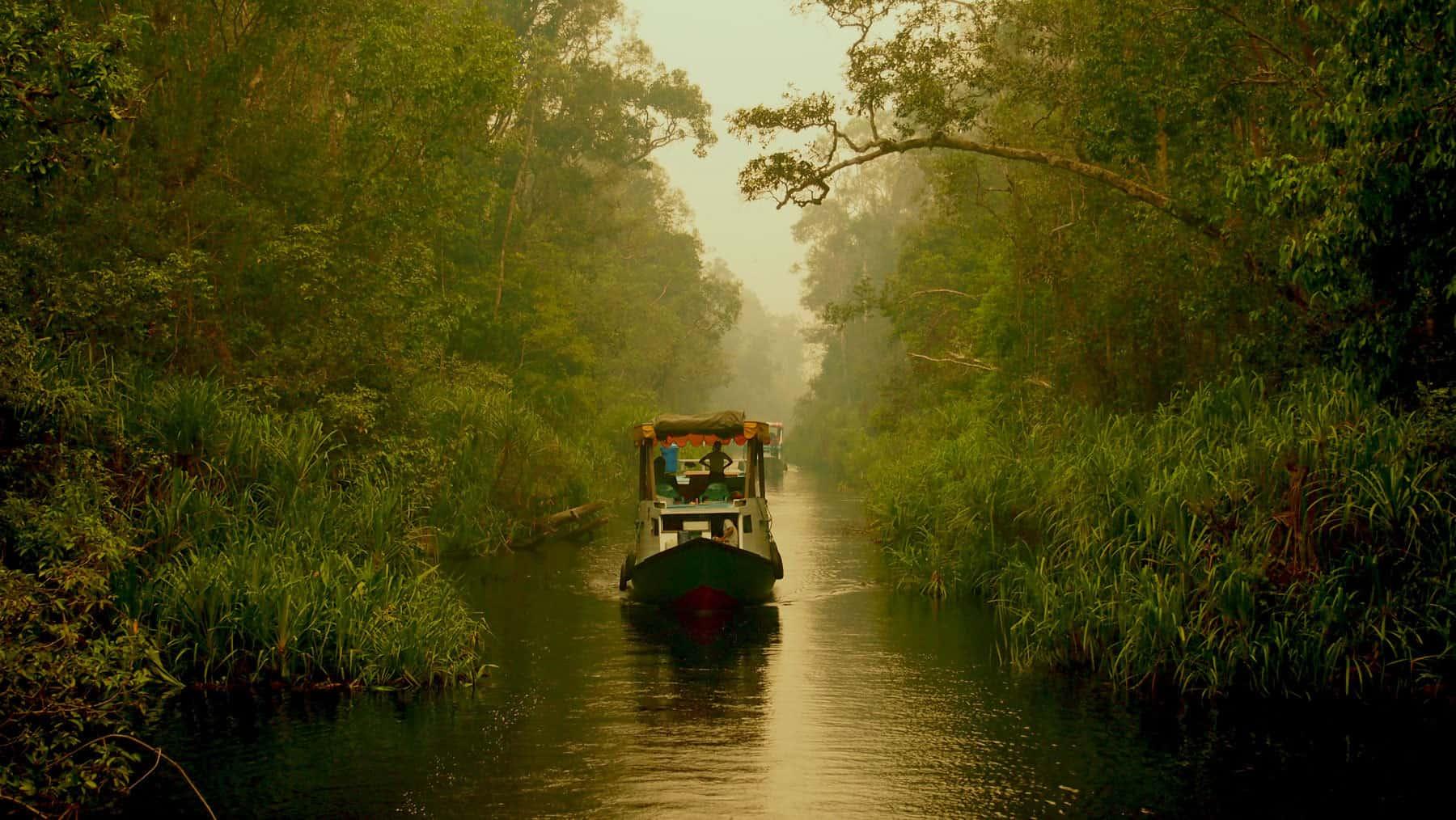 Borneo Tanjung Puting croisière rivière bateau Kalimantan Indonésie