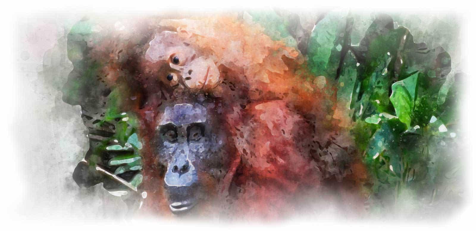 voyage Bornéo orang outan