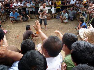 combat de coqs bali arène