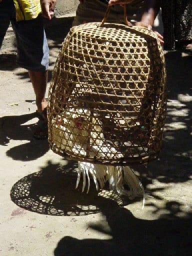 coq cage combat bali indonésie