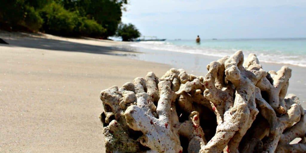 corail ile de gili indonésie