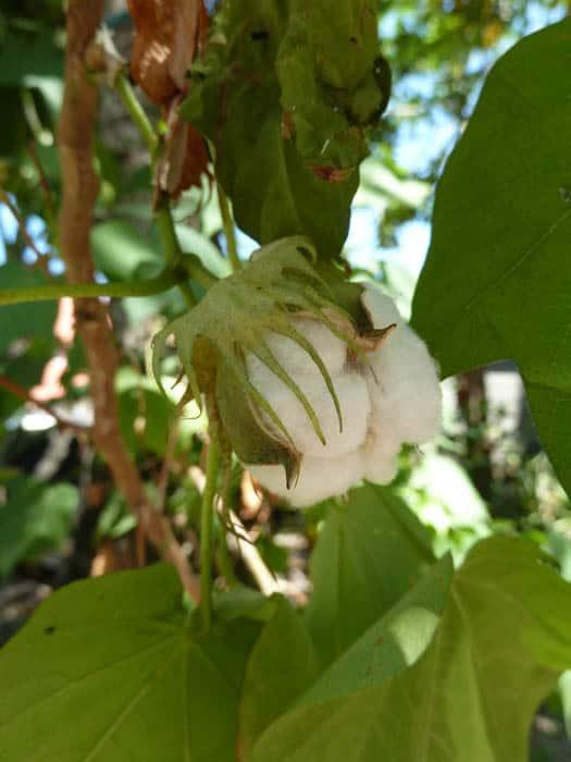 coton fabrication vêtement flores