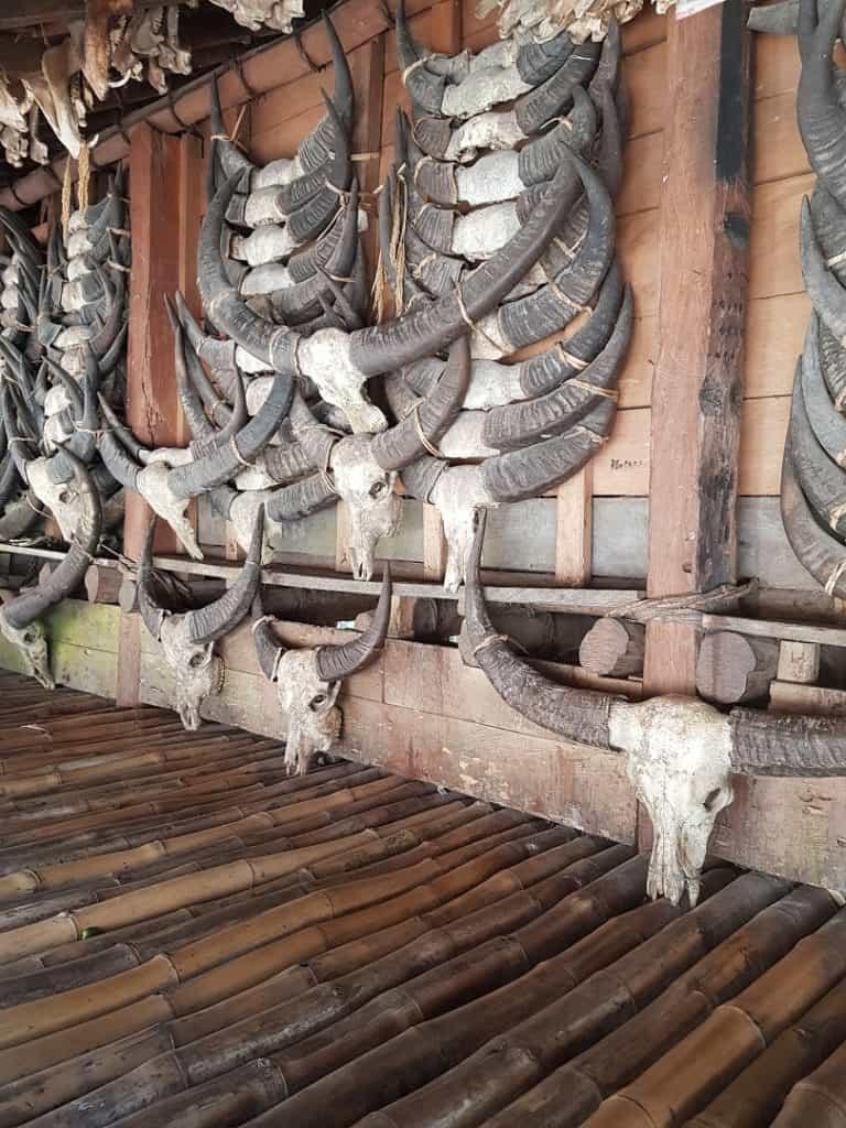 crane buffle tradition sumba voyage