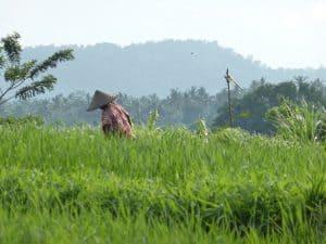 paysage rizières bali à voir