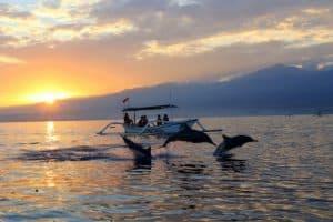 Lovina Bali dauphins