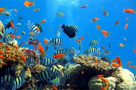 croisière plongée Komodo corail poisson tropical