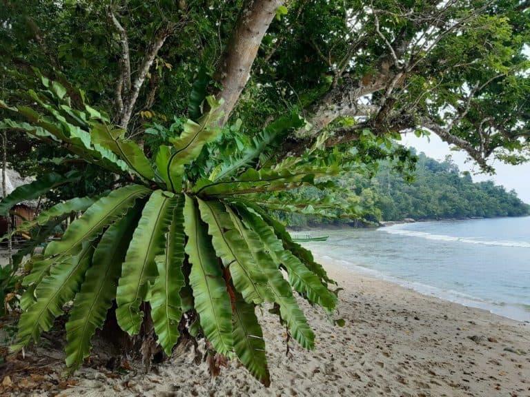 Ecolodge-sumatra