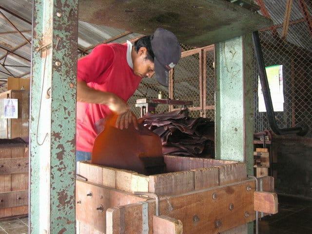 ferme de caoutchouc java homme travailleurs