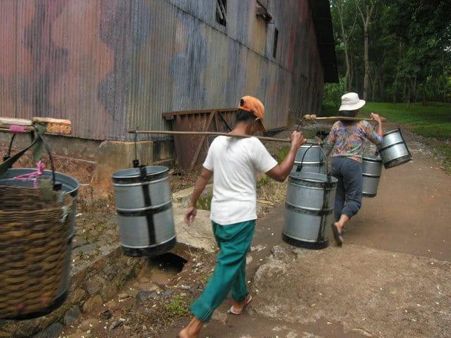 ferme de caoutchouc java travailleurs