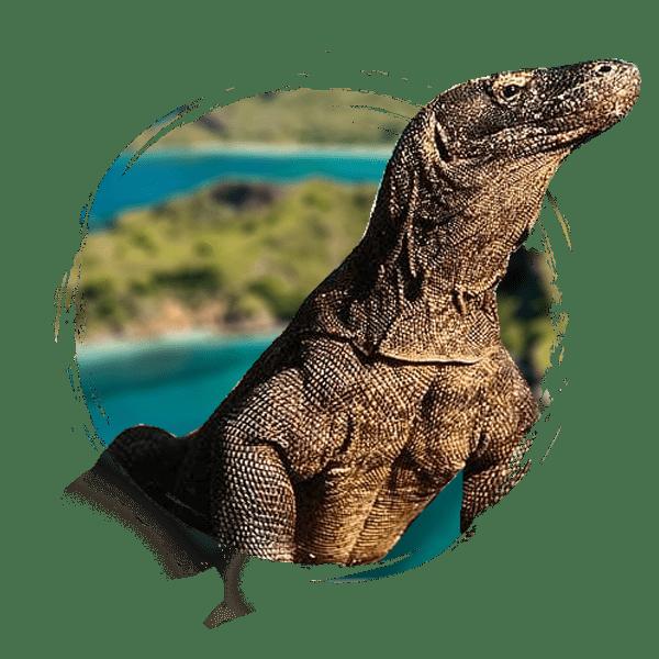 voyage Flores Komodo