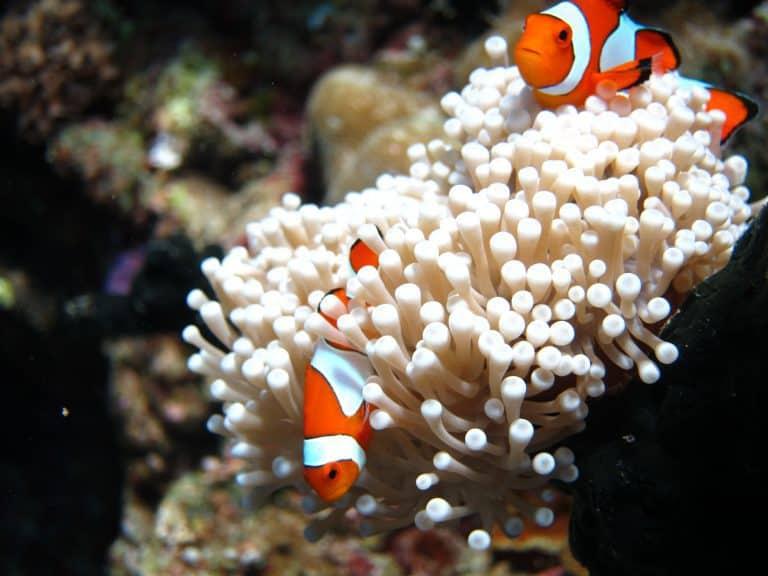 coraux snorkling bali