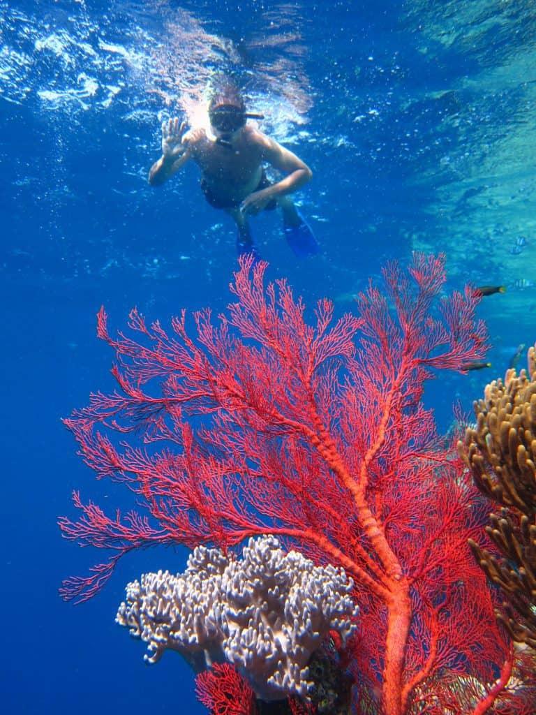 fonds marins colorés bali