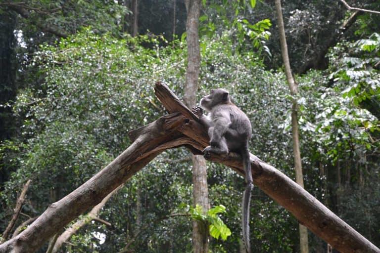 forêt singe temple bali
