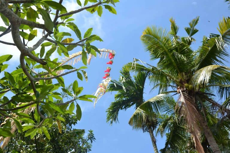 galungan decoration céremonie palmier