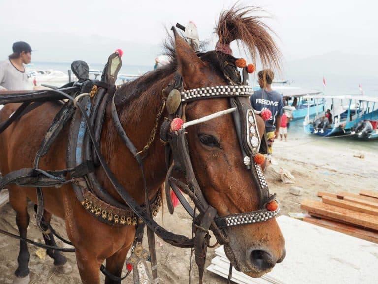 Gili Trawangan cheval charette iles Gili Indonésie Lombok