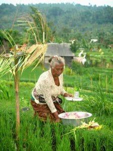 riziculture habitant bali indonésie