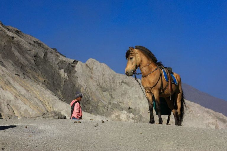 cheval Indonésie marron clair