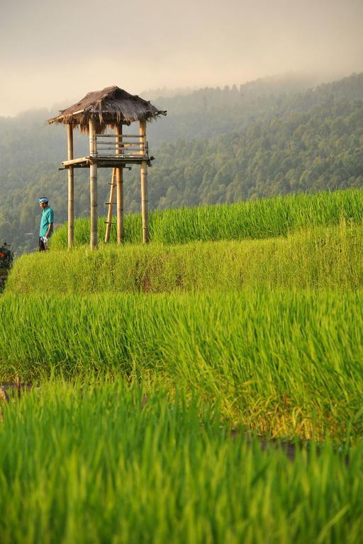 hotel bali banjar cottage vue rizieres